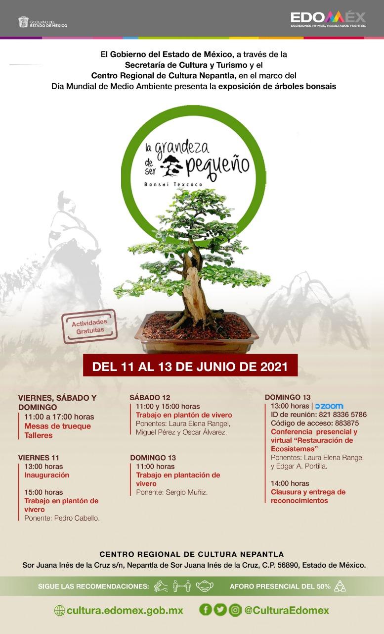 EXPOSICION DE BONSAIS EN NEPANTLA.MX